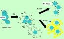 Bài 12.4 Trang 17 Sách bài tập (SBT) Hóa học 8