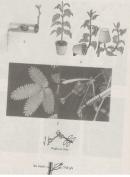 Bài 3 trang 46 Sách bài tập ( SBT) Sinh 11- Bài tập có lời giải