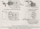Bài 3 trang 51 Sách bài tập ( SBT) Sinh 11- Bài tập tự giải