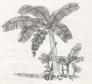 Tập làm văn - Ôn tập về tả cây cối trang 54 Vở bài tập (VBT) Tiếng Việt 5 tập 2