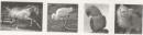 Tập làm văn - Tả con vật (Chuẩn bị cho bài kiểm tra viết) trang 79, 80 Vở bài tập (VBT) Tiếng Việt 5 tập 2